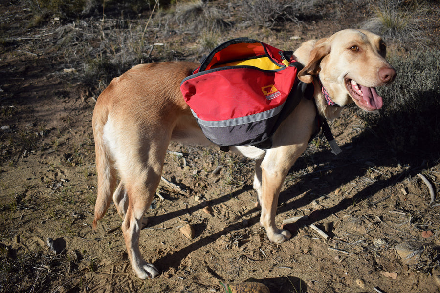 Mountainsmith K-9 Pack