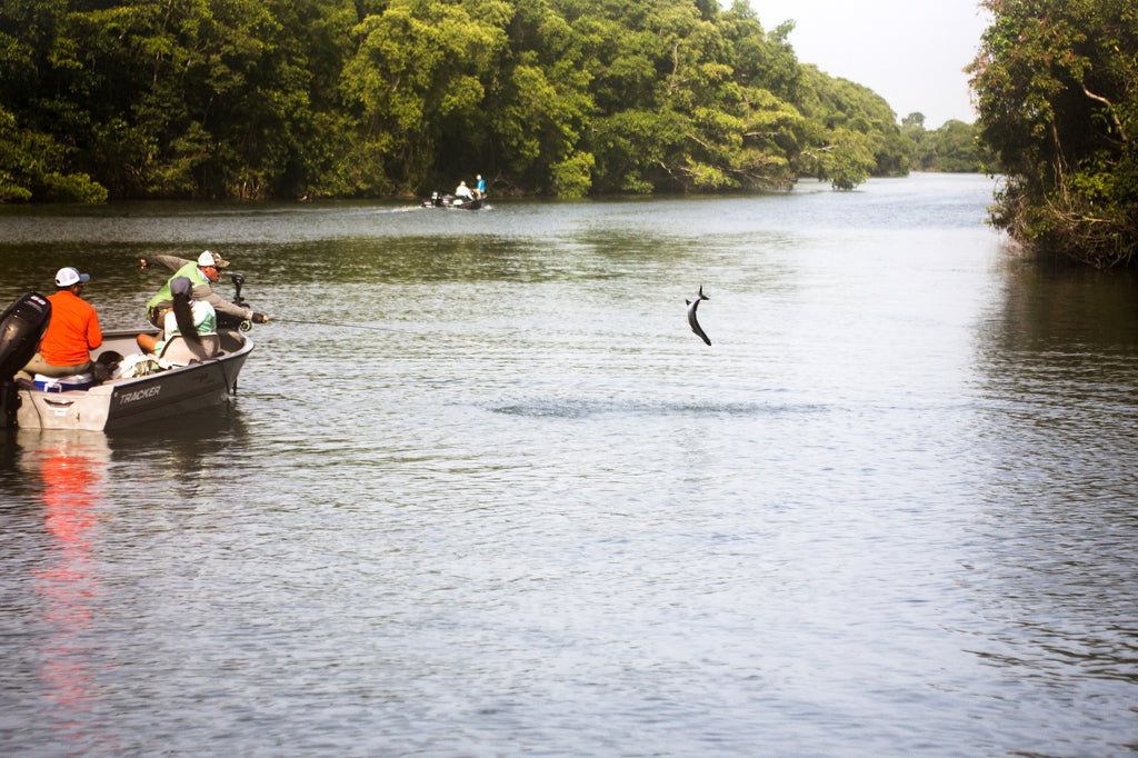 Jumping Tarpon in Tabasco Mexico