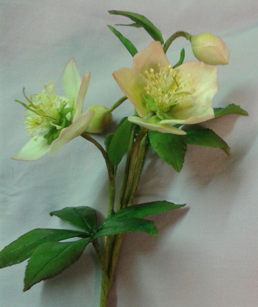 Christmas Rose Set - Cutters/veiner/flowerpaste/stamens