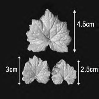 Great Impressions (SK) Leaf Veiners - Tellima - set of 3 4.5cm/3cm/2.5cm GM01T001-03