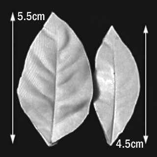 Great Impressions (SK) Leaf Veiners - Camellia - set of 2 5.5cm/4.5cm.  GM01C004-02