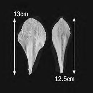 Great Impressions (SK) Petal Veiners - Amaryllis - set of 2 13cm/12.5cm GM05A003-04