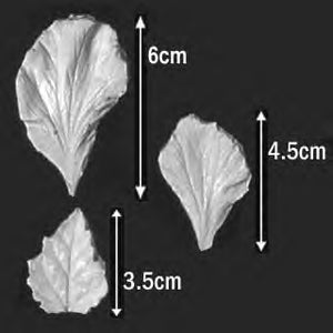 Great Impressions (SK) Petal Veiners - Hibiscus(petal/leaf) - set of 3 5.5cm/4.5cm/3.5cm.  GM05H001-03