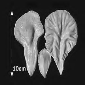 Great Impressions (SK) Petal Veiners - Iris-Bearded (3 pieces) 10cm GM05I001-01