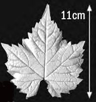 Great Impressions (SK) Leaf Veiners - Grapevine, Very Large 11cm.  GM01G005-01