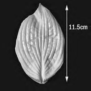 Great Impressions (SK) Leaf Veiners - Hosta 11.5cm GM01H011-01