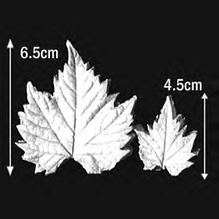 Great Impressions (SK) Leaf Veiners - Grapevine - set of 2 6.5cm/4.5cm.  GM01G005-03