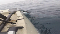 Kayaker Fights Shark Over Yellowtail!