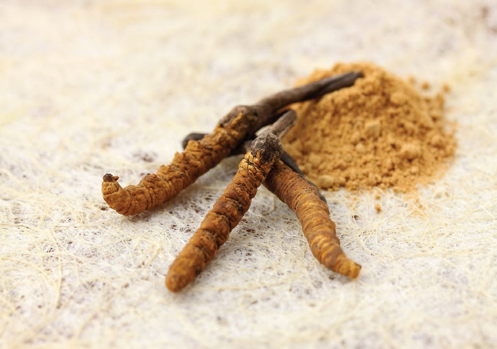 Discover the benefits of Cordyceps for yourself