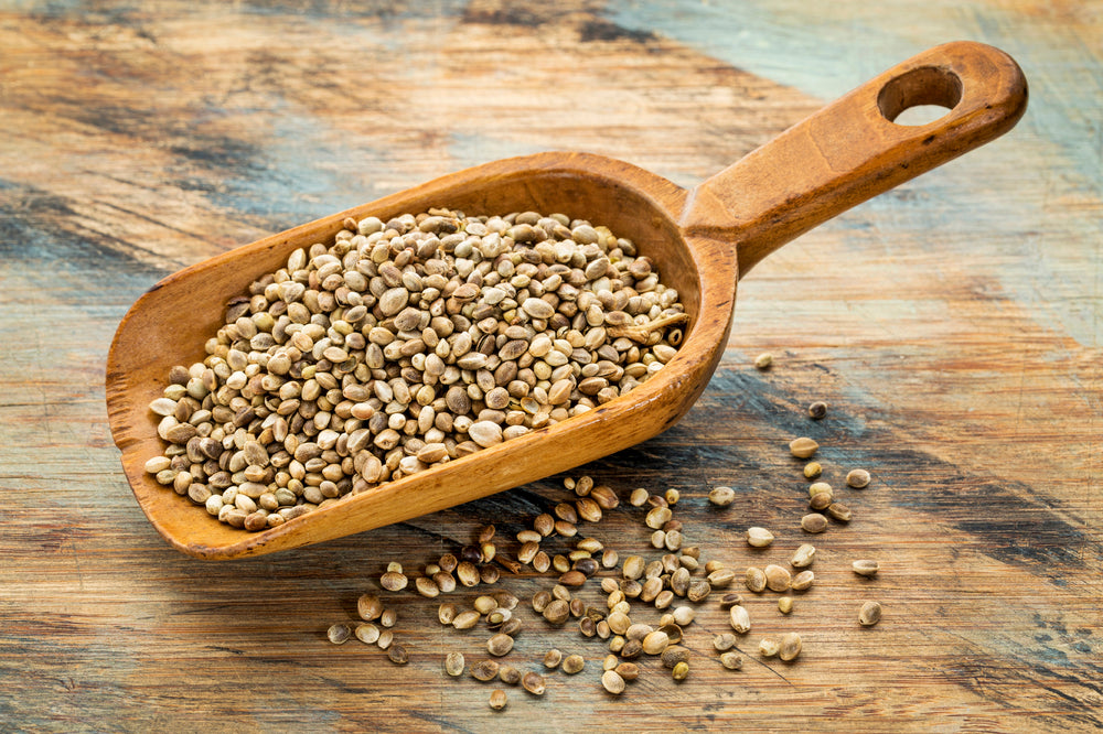 The Facts About Hemp Protein