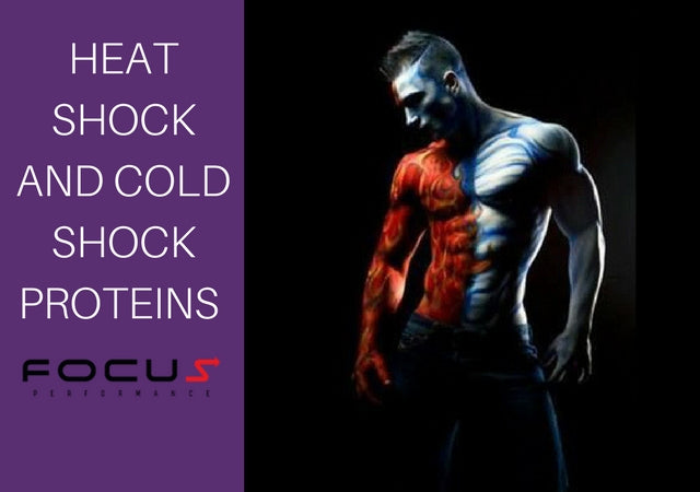 What Do Heat Shock & Cold Shock Proteins Do For Your Body