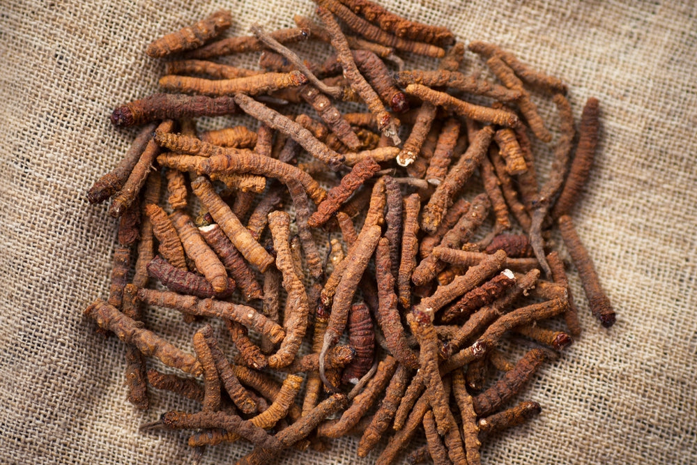 What are some of the general benefits of Cordyceps