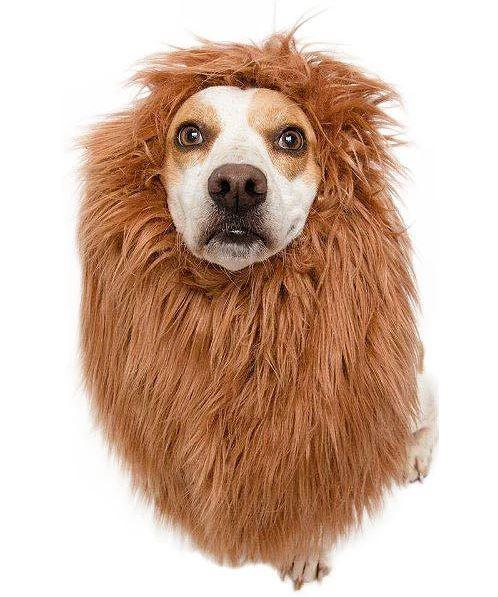 Pet Lion Mane Cosplay