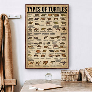 Types Of Turtles Poster