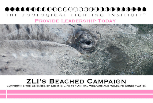 ZLI's Beached Scholarship