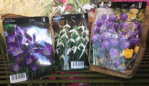 Large Bulbs (3 for £1)