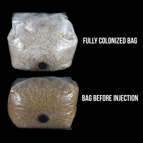 injection port grain bag before and after inoculation with a spore or culture syringe