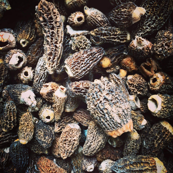 Morel Cultures for Commercial Customers