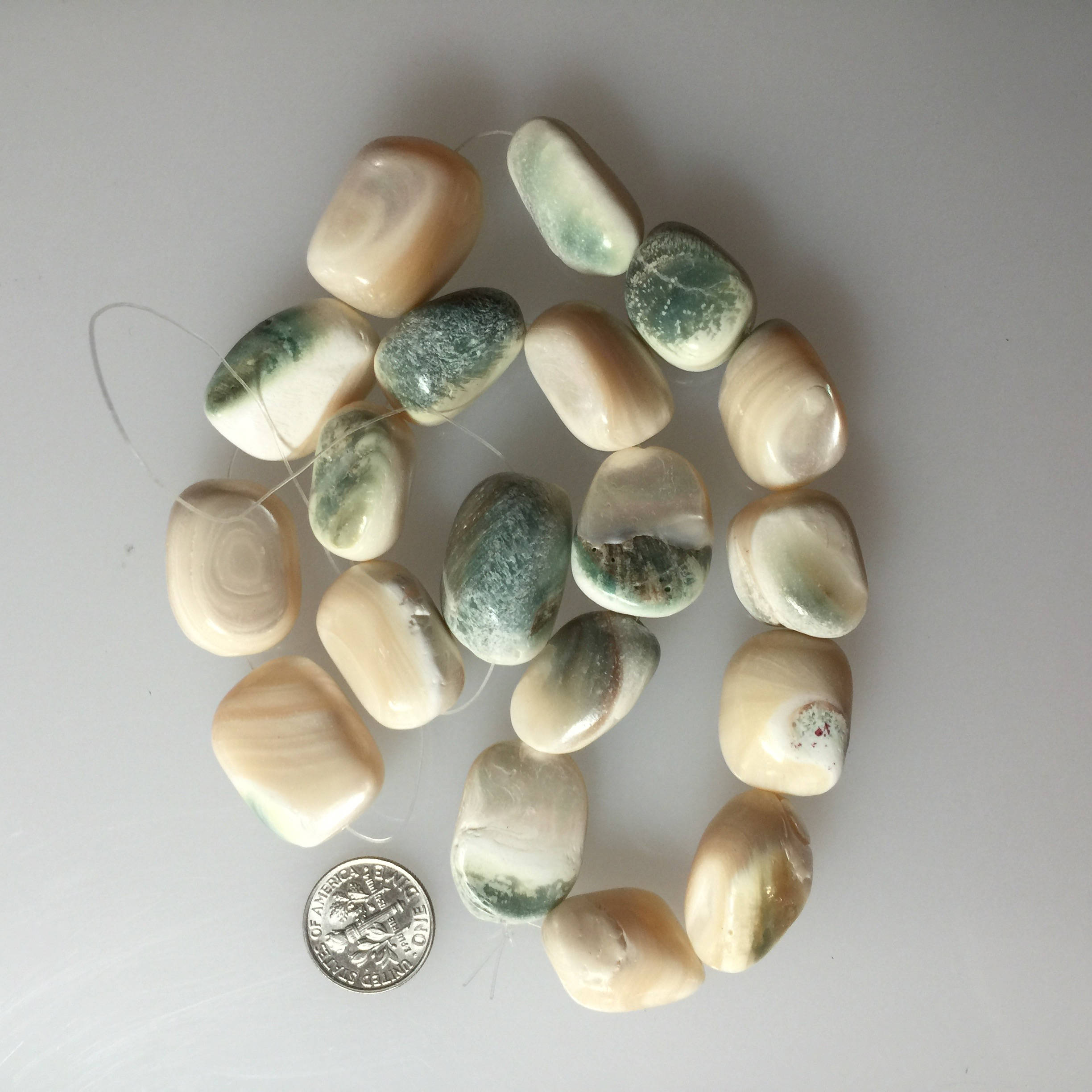Eye of Buddha Shell Beads
