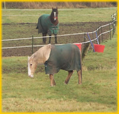 Horses behind an Electric Fence