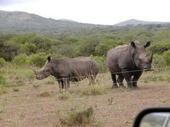 Rhino behind Electric Fence