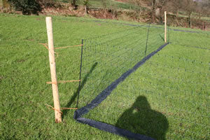 Damp Course under a Net.
