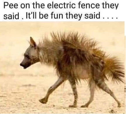 Pee on a fence