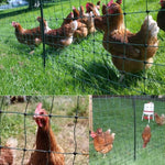 50m 120 cm Tall Chicken Net.