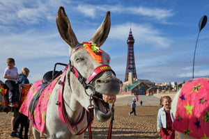 A laughing donkey by the pier