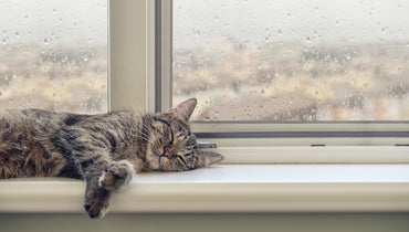 Why Does Rain Make You Sleepy?