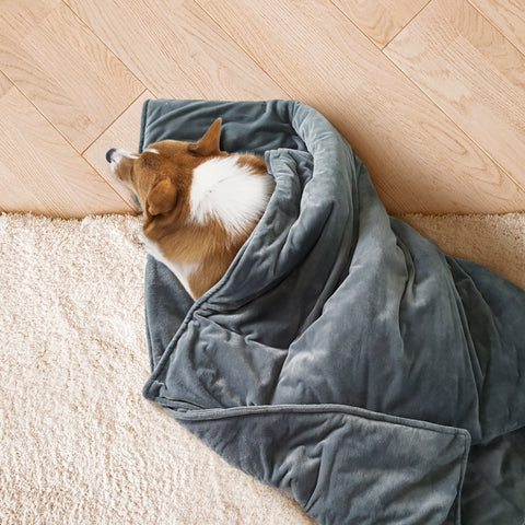weighted dog blanket