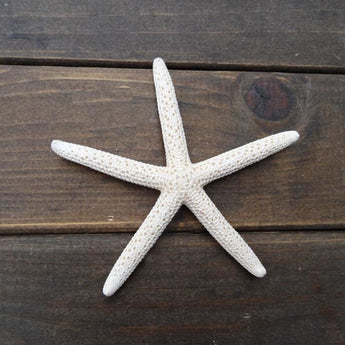 Nauticalseries - Set Of 12 Pieces White Starfish - - Accessories