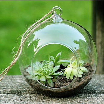 Clear Round Hanging Glass / Vase / Terrarium