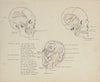 Academic Skull & Face Study <br>Mid 20th Century Ink & Graphite<br><br>#41340