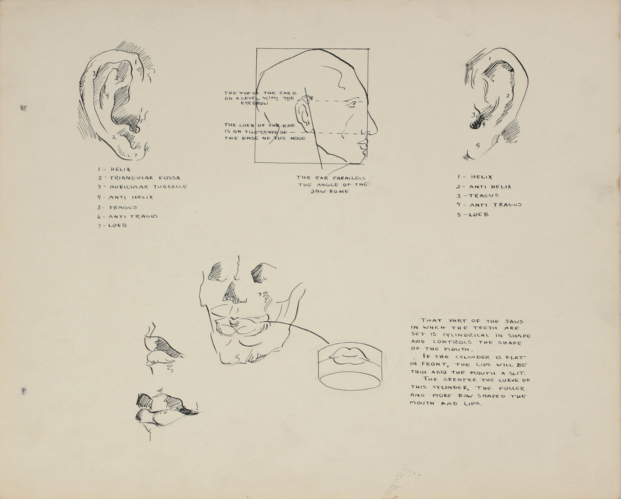 Academic Ear Study <br>1950s Ink and Graphite <br><br>#41349