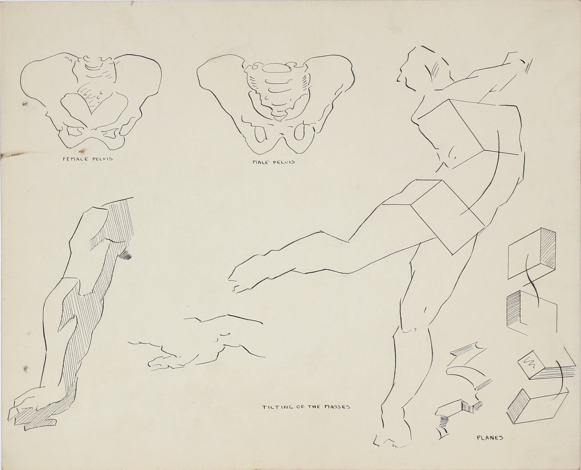 Academic Hips in Motion <br>1951 Ink & Graphite <br><br>#41361