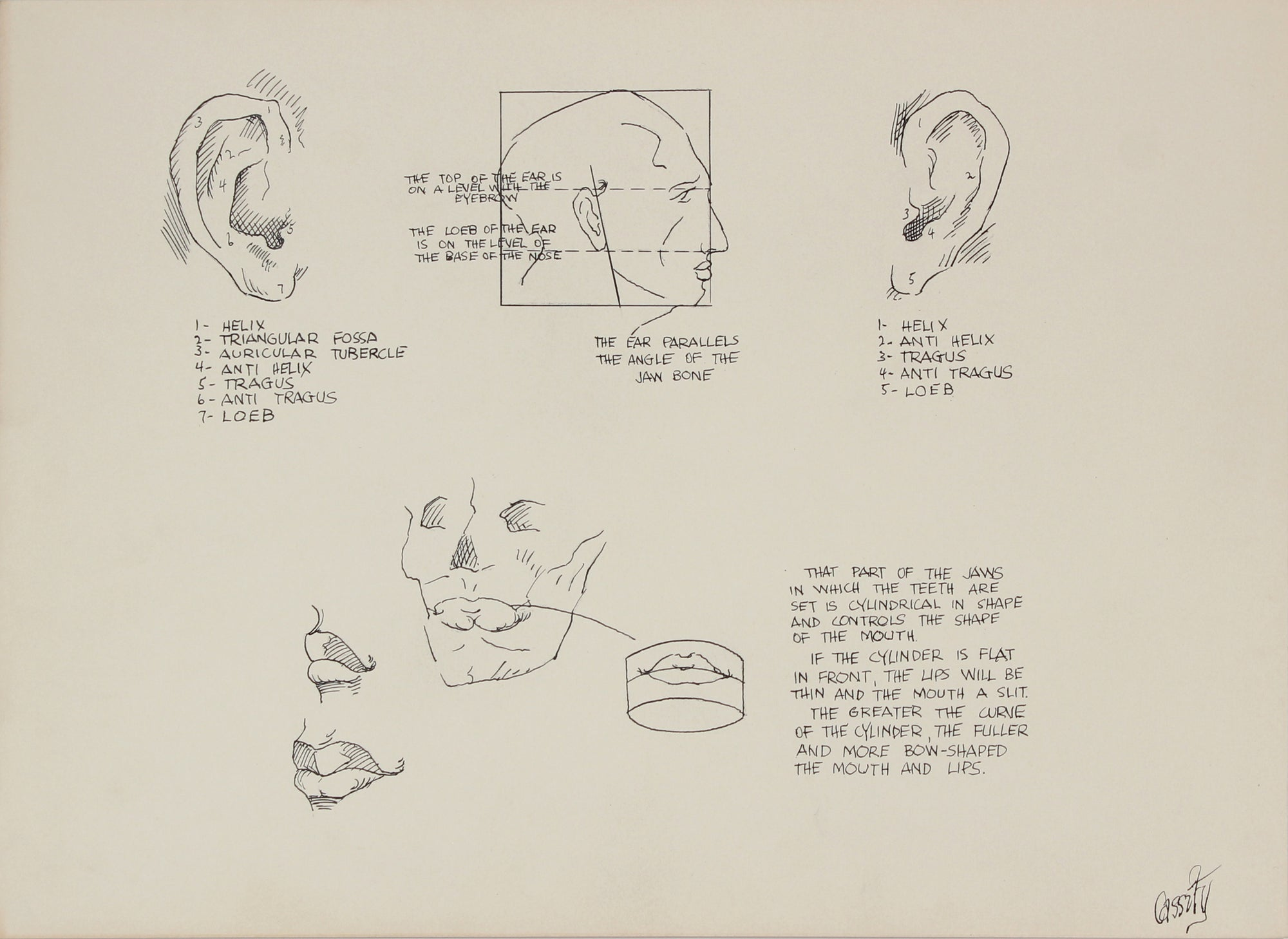 Anatomical Ear Drawing<br>1950s Ink & Graphite <br><br>#41369