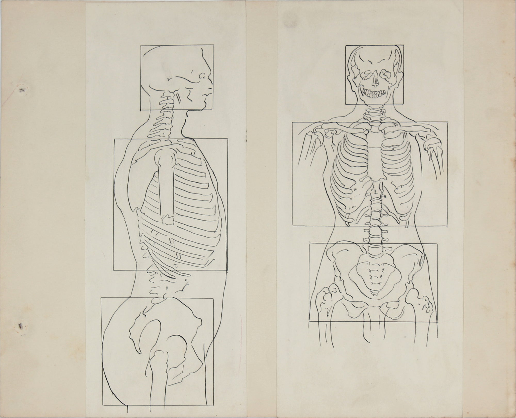 Academic Skeletal Torso Study <br>1950s Ink & Graphite <br><br>#41375