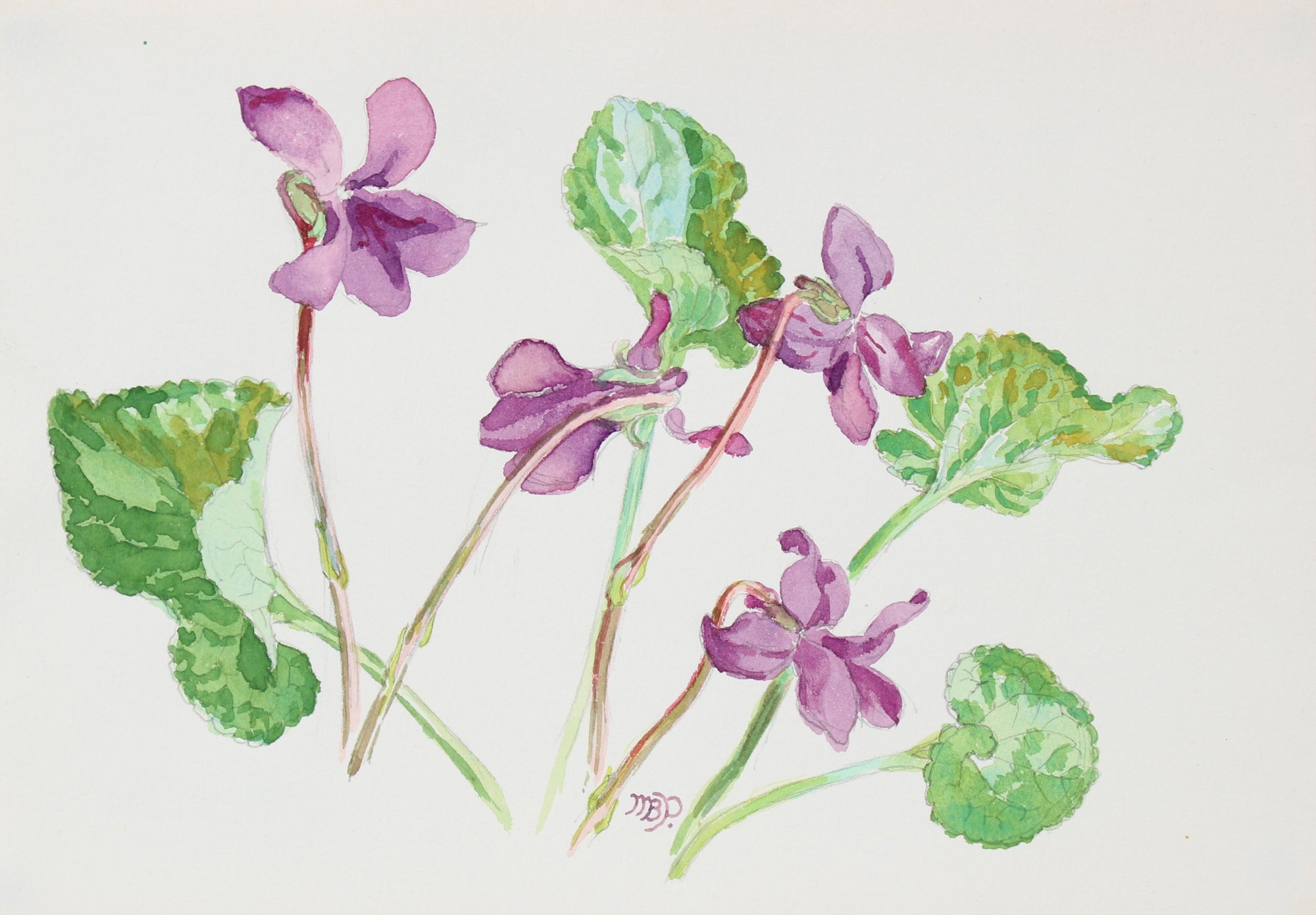 <i>Violets</i><br>Mid-Late 20th Century Watercolor<br><br>#98655