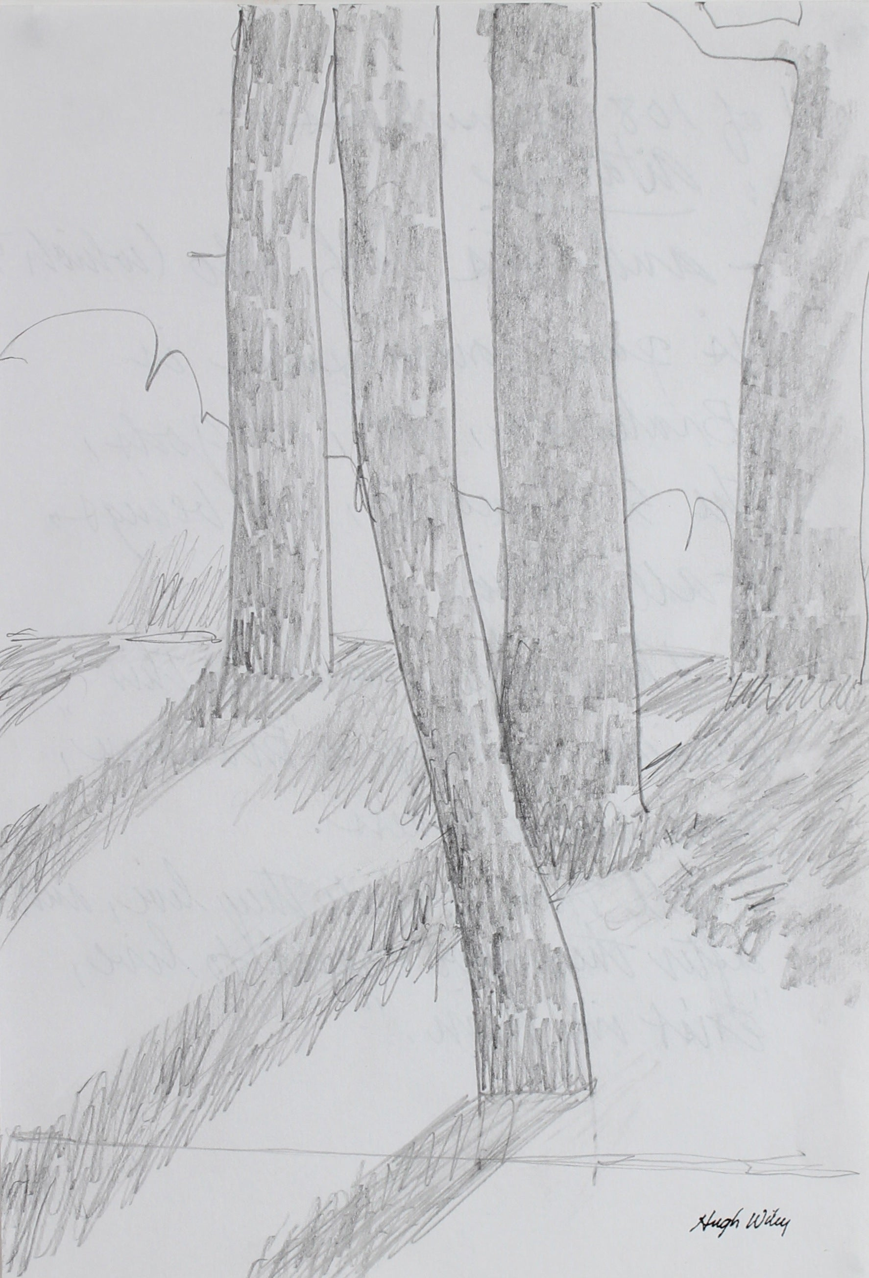 Trees in Afternoon Light <br>2004 Graphite <br><br>#A1798