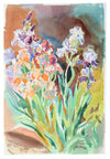<i>Shirley's Iris</i> <br>1982 Watercolor <br><br>#A3567
