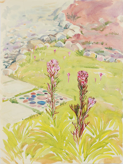 Owls Clover, California Wildflowers <br>20th Century Watercolor & Graphite <br><br>#A8032