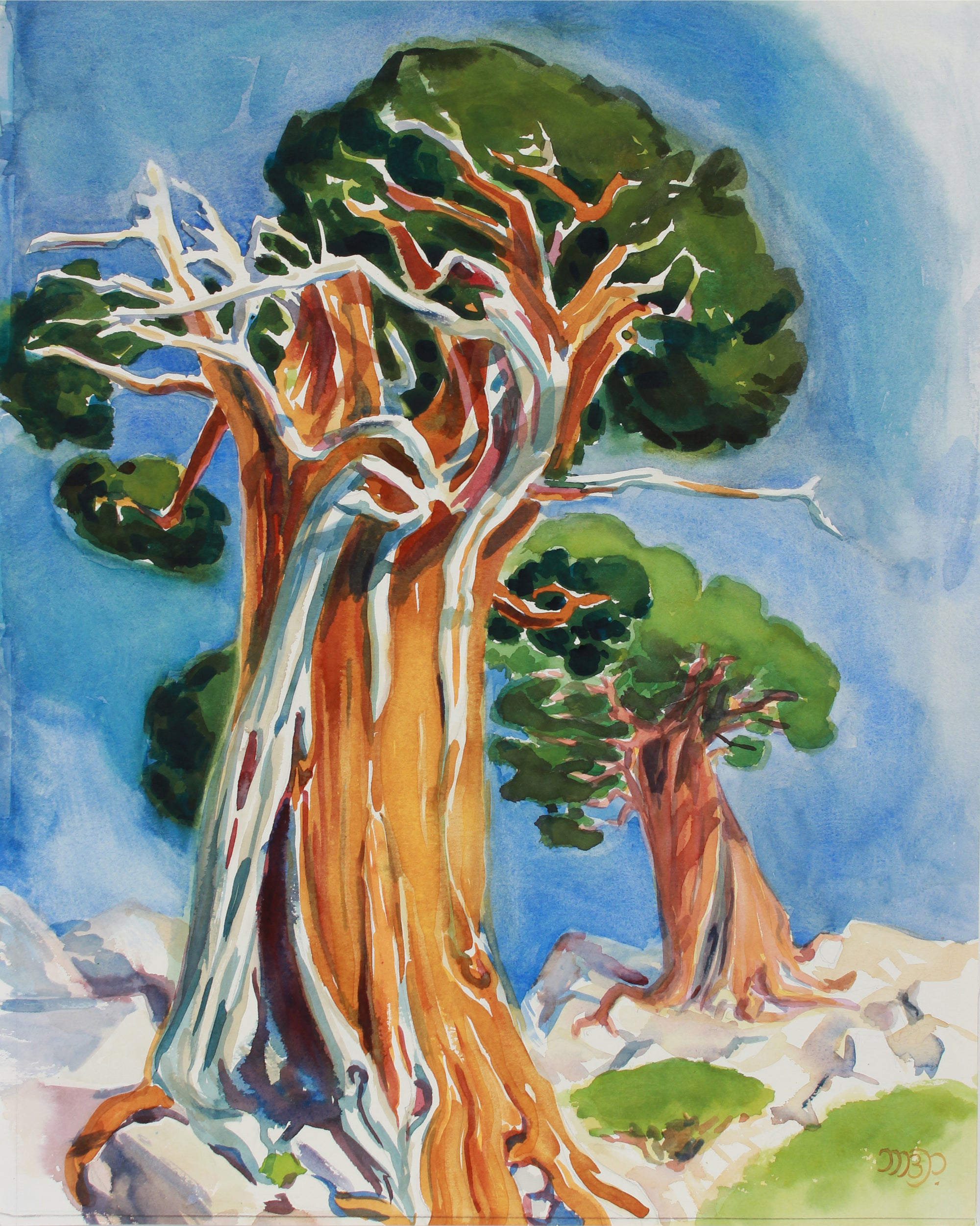 <i>Age-Old Juniper, Susie Lake</i> <br>20th Century Watercolor <br><br>#B0539