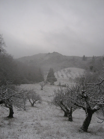 <I>Orchard in Snow</I><br>Mendocino, California, 2010<br><br>GC0016