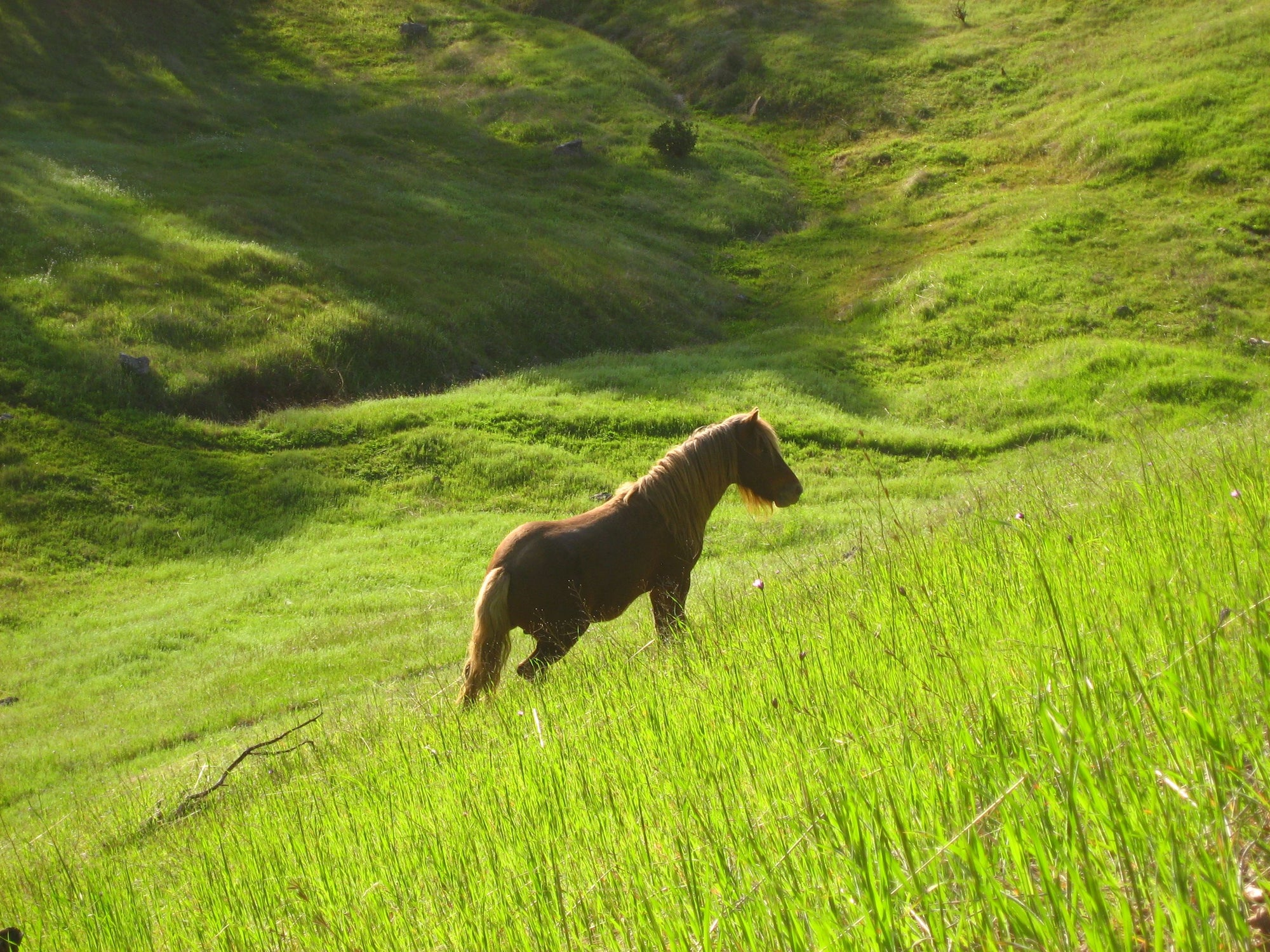 <I>Stallion in Green Meadow</I><br>Mendocino, California, 2010<br><br>GC0215