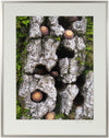 <I>Blue Oak Bark, Moss & Acorns</I><br>Mendocino, California, 2010<br><br>GC0245