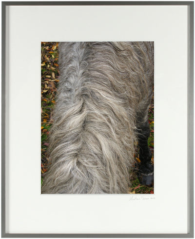 <I>Wild Pony Mane</I><br>Mendocino, California, 2010<br><br>GC0249