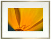 <I>Cup of Gold (California Poppy)</I><br>Mendocino, California, 2013<br><br>GC0359