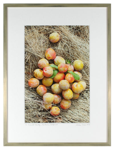 <I>Emerald Beauty (Plums)</I><br>Mendocino, California, 2013<br><br>GC0362