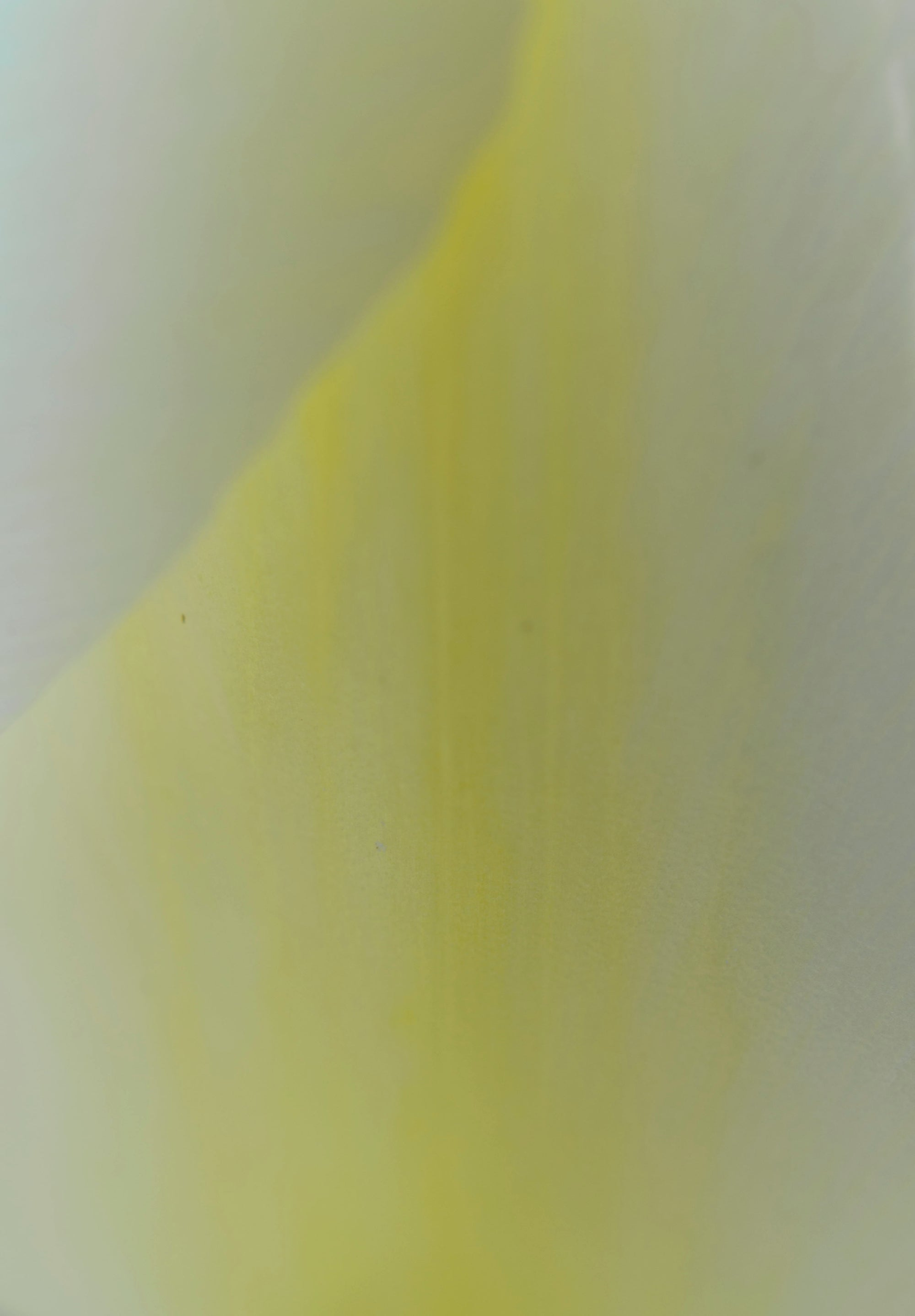 <I>Yellow & White (Tulip)</I><br>Mendocino, California, 2014<br><br>GC0383